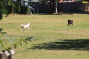 Dogs in Blue Gum Reserve, Cowes