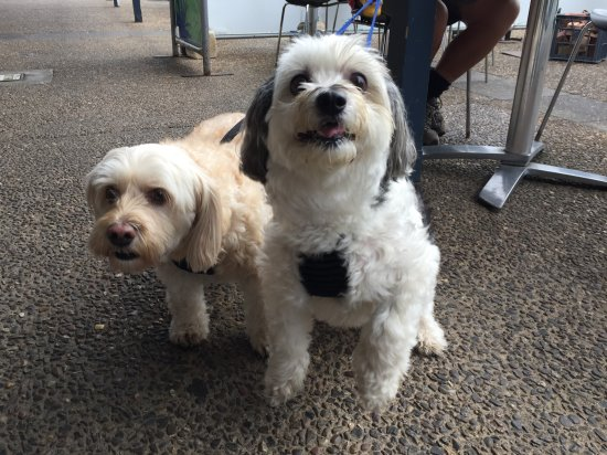 Dogs at Kuta Cafe, Cowes