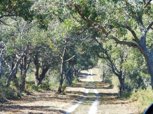 Walking/cycling track at French Island National Park