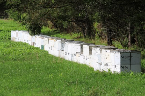 Bee hives in the bush at Phillip Island
