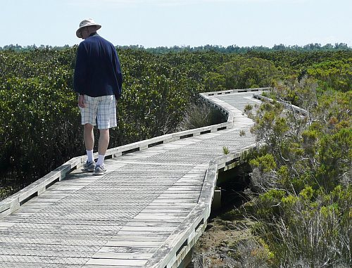 Mangrove boardwalk at Rhyll