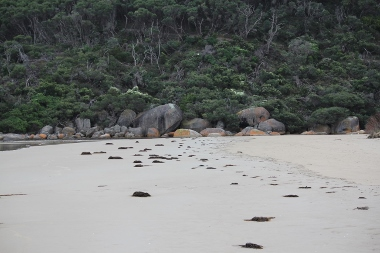 Beach at Tidal River, Wilson's Promontory