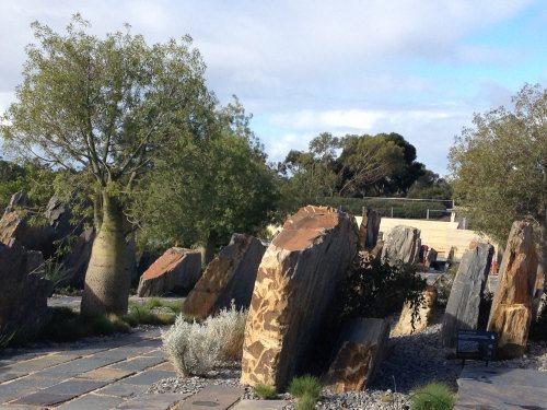 Bottle tree and rocks