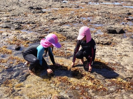 Children exploring rock pools